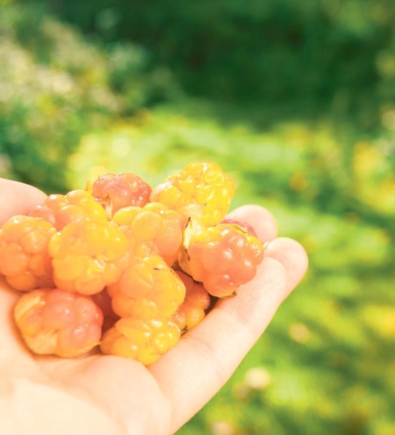 Moheda Bio Moltebeeren Konfituere Extra 200 g skandinavisches-fruehstueck